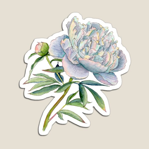 Peony in watercolor and ink by farrahdelle Magnet