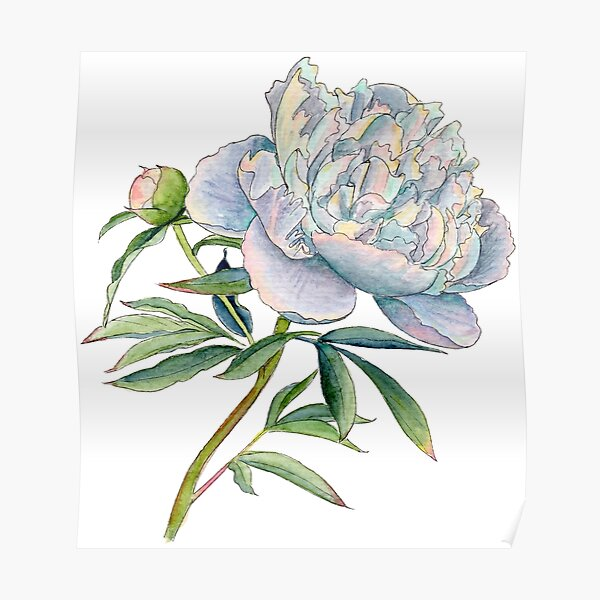 Peony in watercolor and ink by farrahdelle Poster