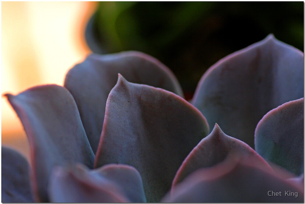 Succulent Shapes by Chet  King