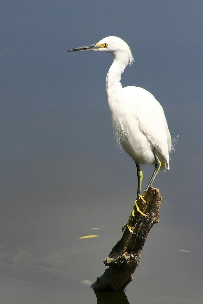 bird by JohnKeeley