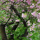 Spring Dream at Galicia . © Dr.Andrzej Goszcz. 27/04/2018. by © Andrzej Goszcz,M.D. Ph.D
