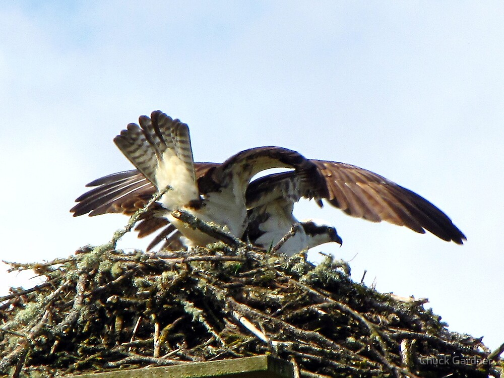 The Nest is Built!  It's Time to Play… by Chuck Gardner