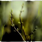 spring revealed by Rene Hales