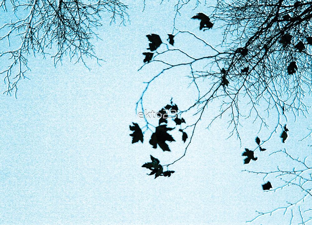 Blue Leaves by ekto23