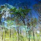 Ichetucknee Reflections by David Lee Thompson
