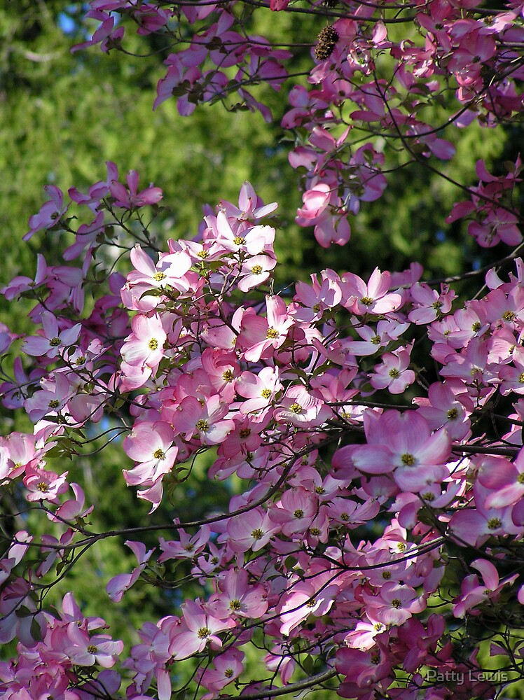 Pretty in Pink ~ Dogwood that is! by Patty Lewis