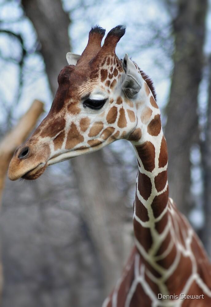 Giraffe by Dennis Stewart