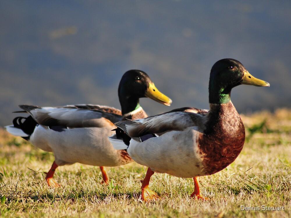 Two Duck Crew by Dennis Stewart