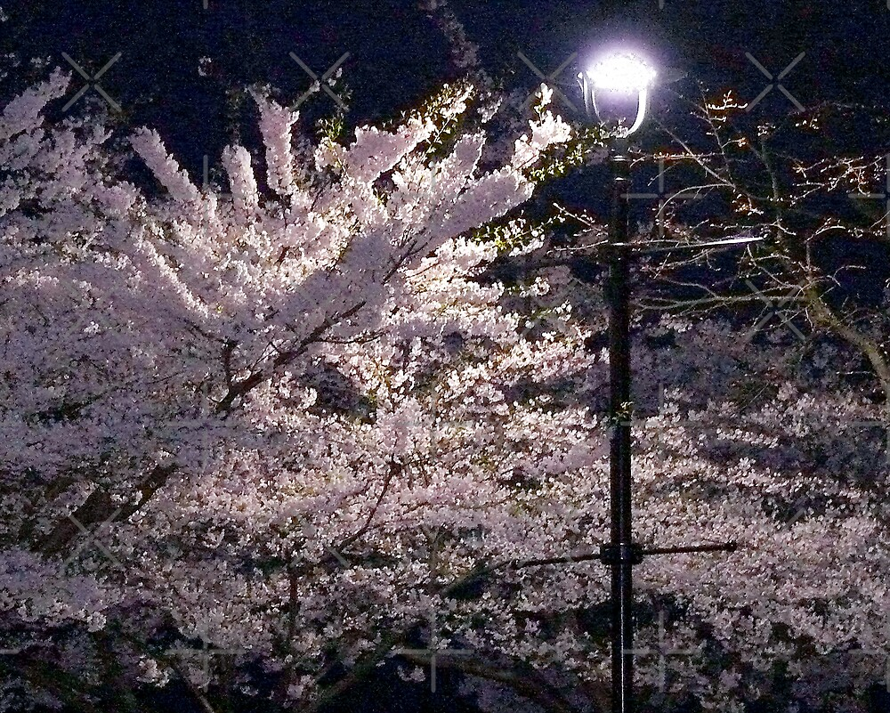 Spring At Night by Gail Bridger