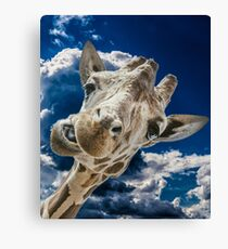 Funny Giraffe And Funny Clouds  Canvas Print