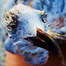 Birdie by JJphotographs