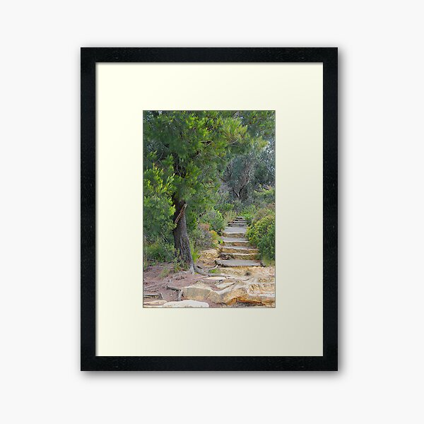 Treescape - Evans Lookout NSW Framed Art Print