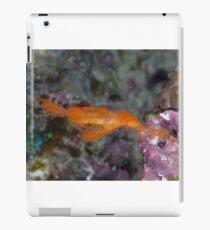 Hairy Ghost Pipefish iPad Case/Skin