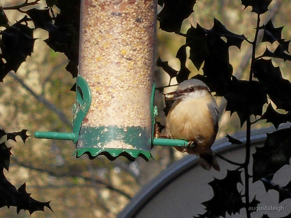 Nuthatch by augustaleigh