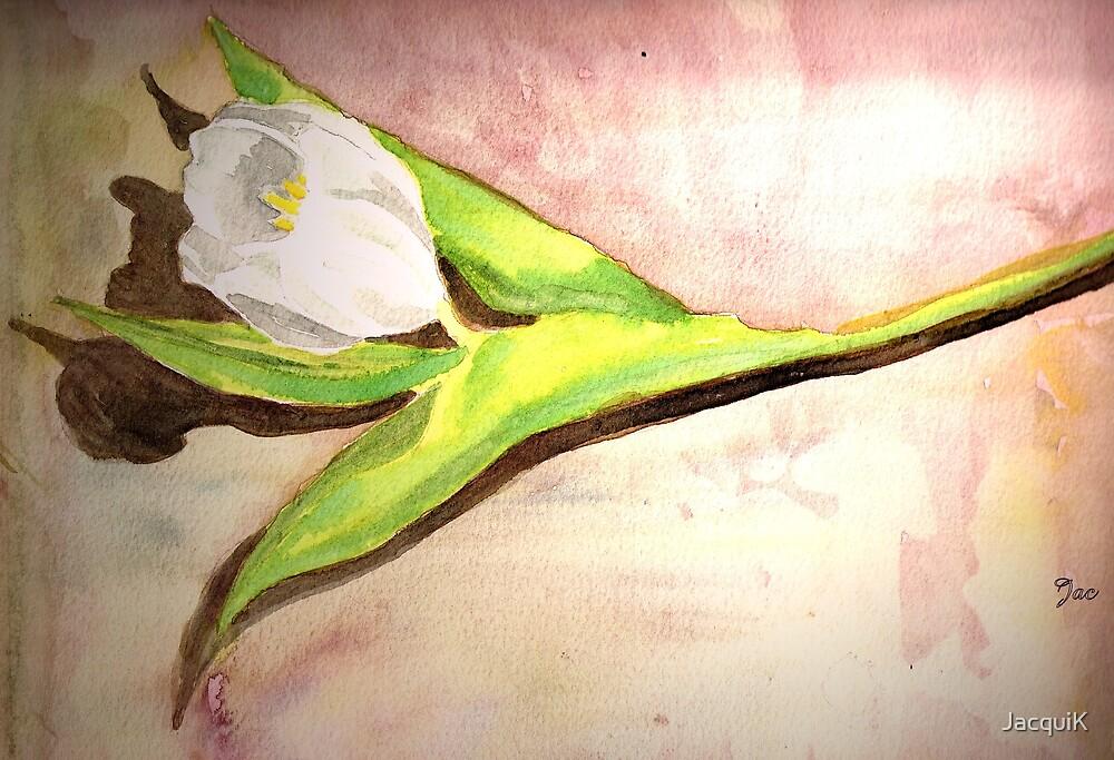 Tulip by JacquiK