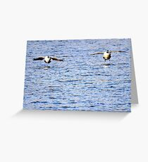 Two Canada geese stick together Greeting Card