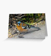 Chaffinch in woodland Greeting Card