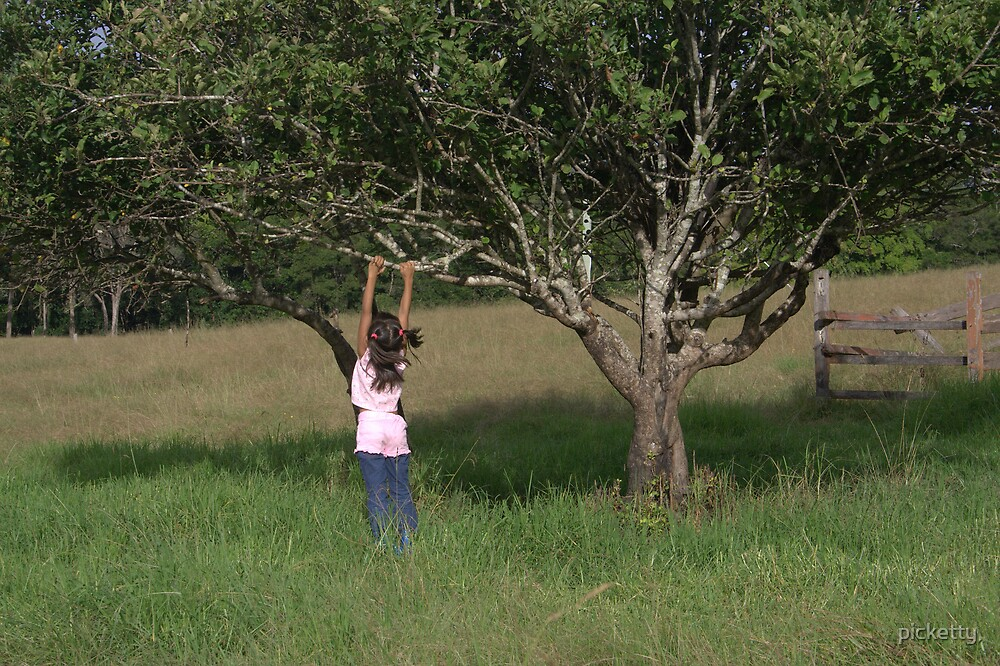 the old apple tree by picketty