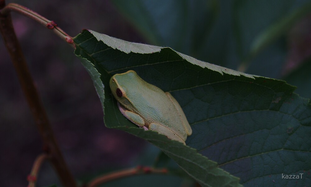 Frog Study 3. by kazzaT