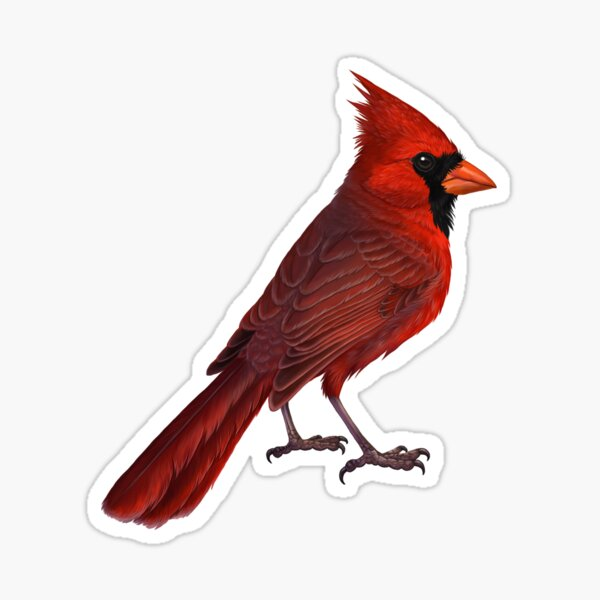 Cute Cardinal Gift For Forest Camp Trip Sticker