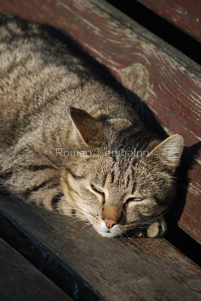 Sleepy Cat by Rowan  Lewgalon