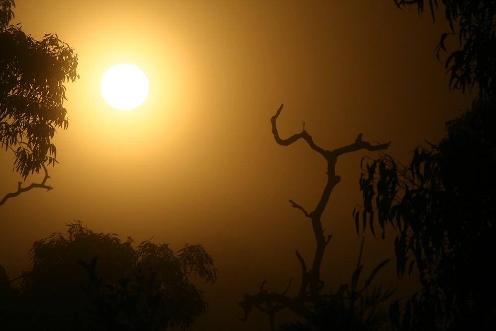 Foggy Sunrise by Kezzarama