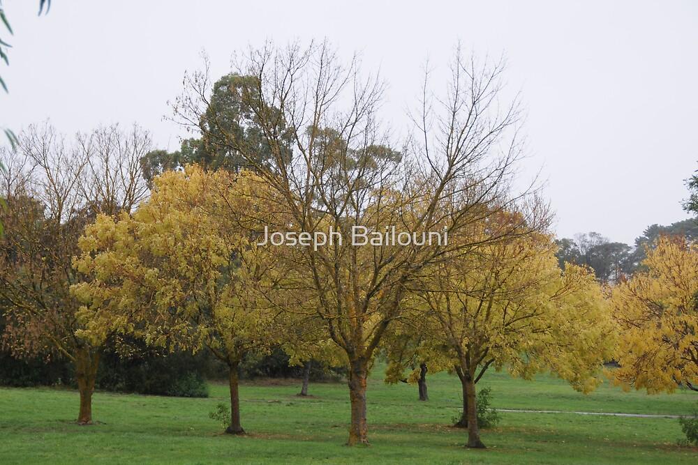 A Crisp Autumn Day  by Joseph Bailouni