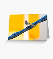 Baby swallow 2 Greeting Card