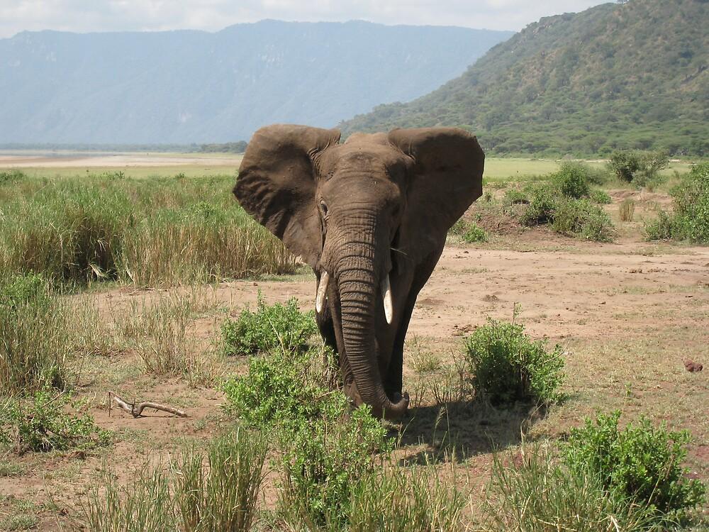 elephant in lake manyara, tanzania by mzungu