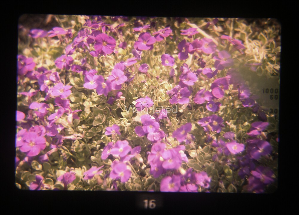 TtV Aubritia by Vicki Isted