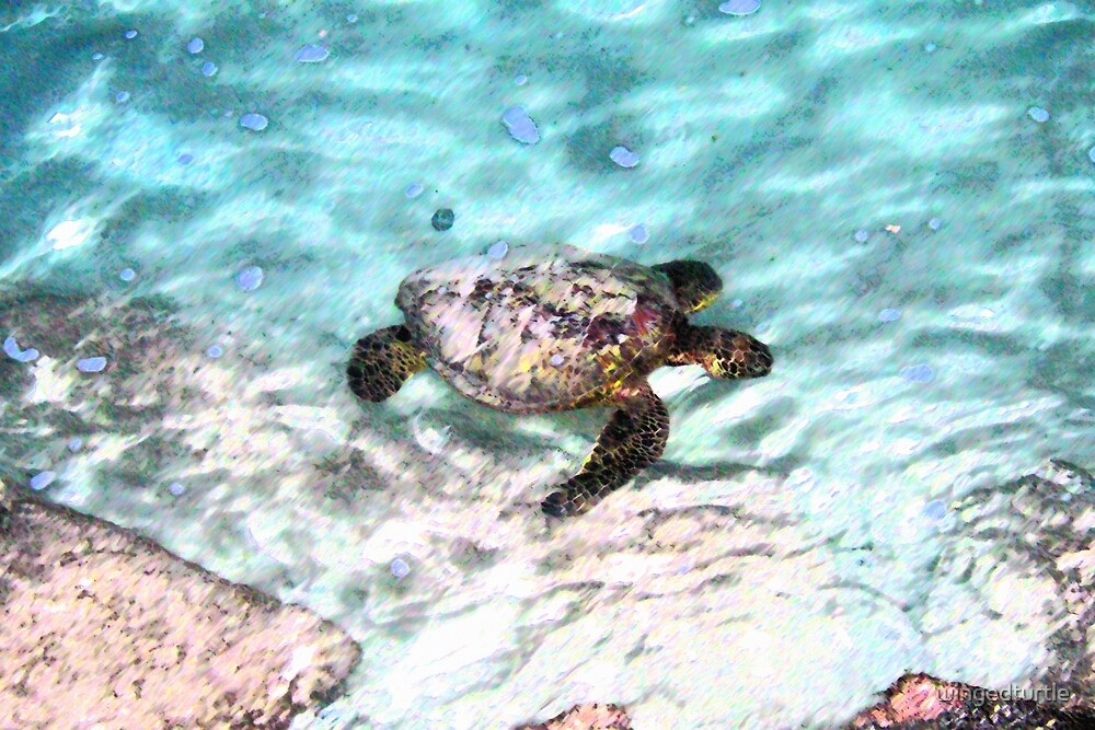 Swimming Sea Turtle by wingedturtle
