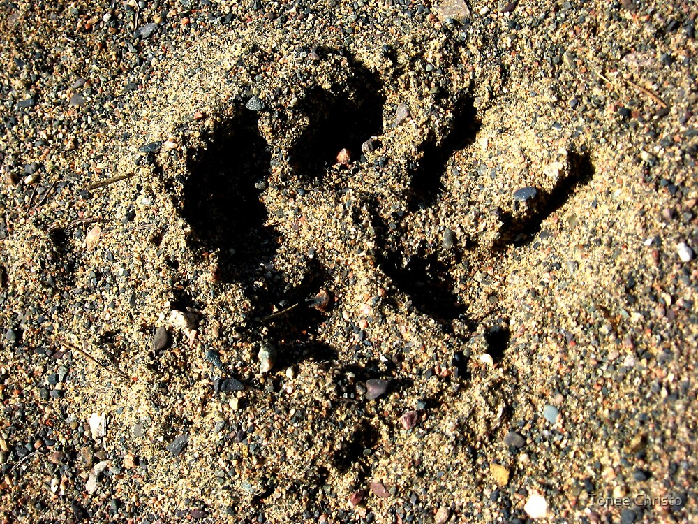 Footprint In The Sand by Tonee Christo