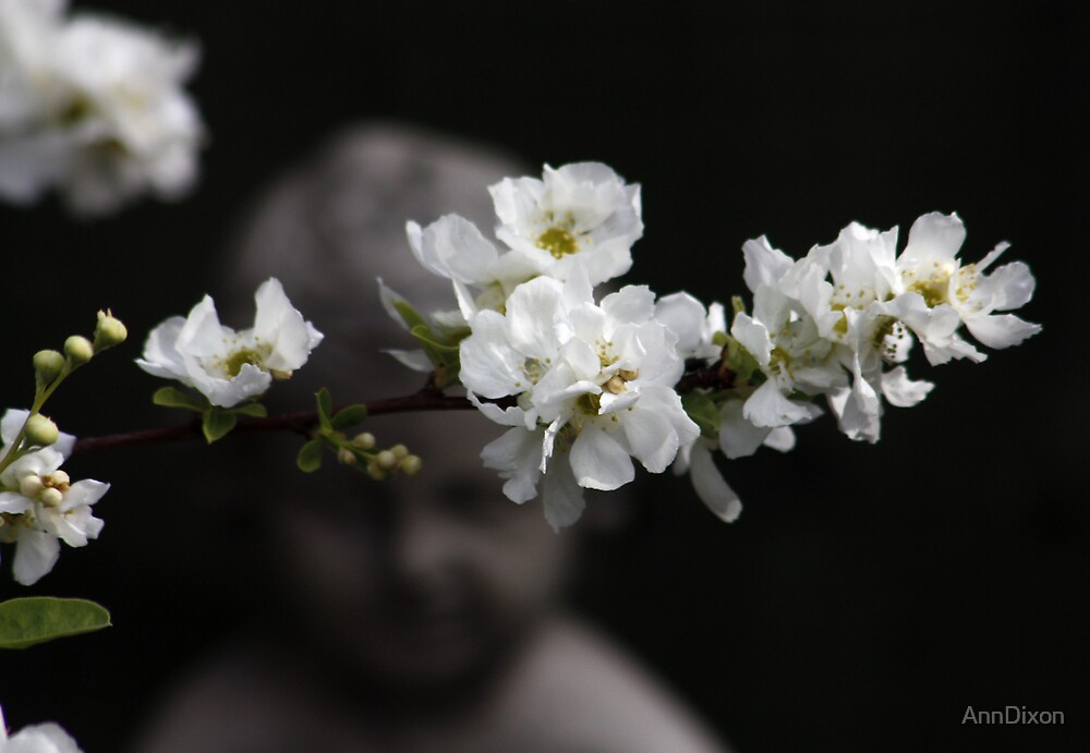 Bridal Bush, by AnnDixon