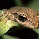 Tree Frog Portrait by WorldDesign