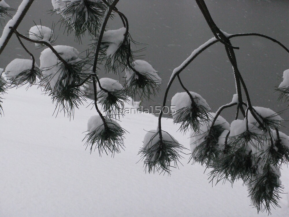 Snow/Ice Drops by wanda1505