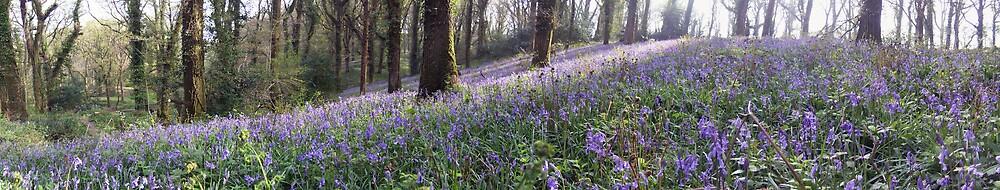 Bluebell Woods by Samuel Fletcher