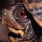 Turtle Portrait by WorldDesign