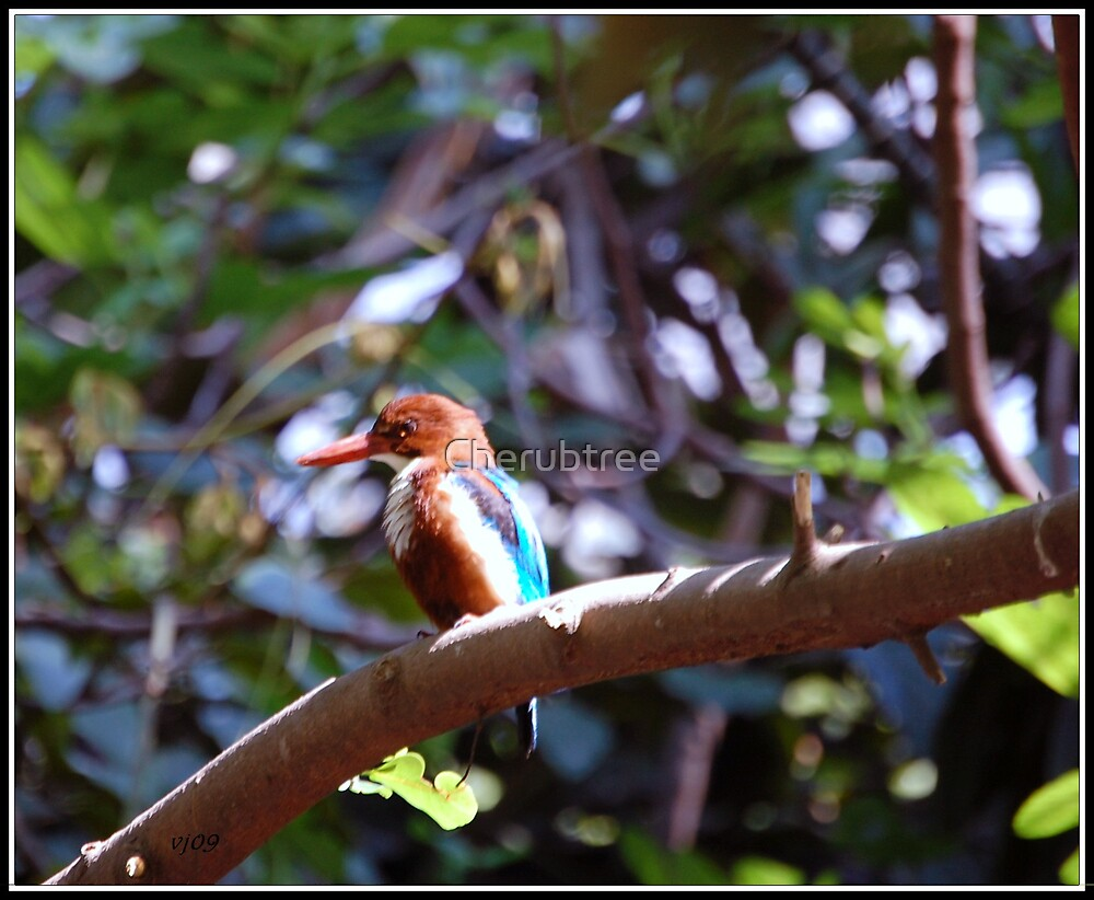 Kingfisher singing for his supper: by Cherubtree