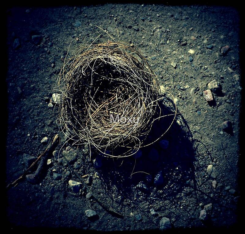 Birdnest 1 by Moxy