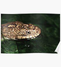 Water Snake Poster