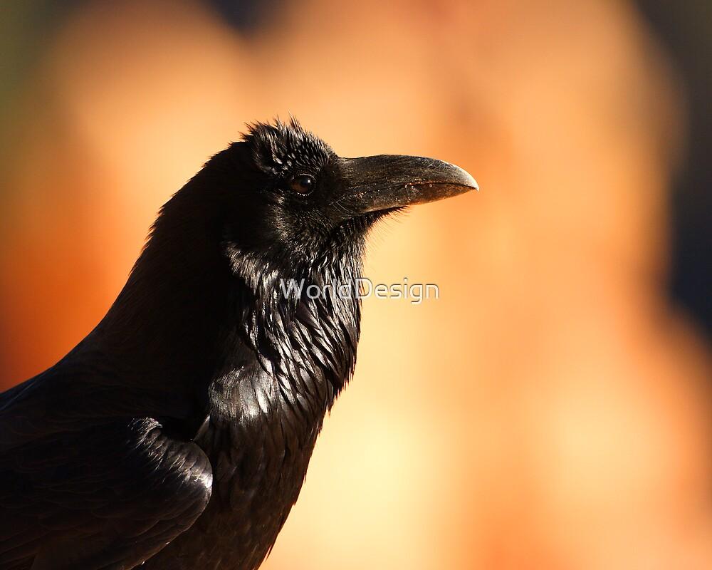 Raven Portrait at Sunset by WorldDesign