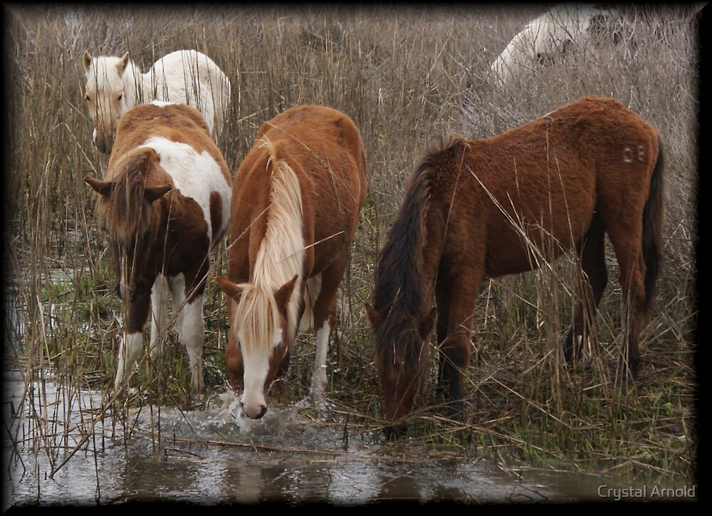 Wild horses by Crystal Arnold