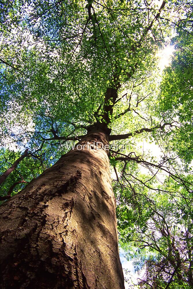 Old-Growth Beech Tree by WorldDesign