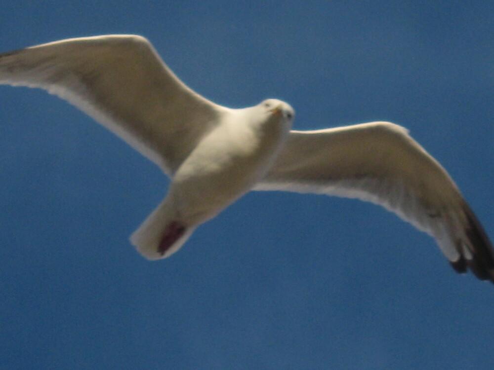 BIRD IN FLIGHT by Deirdre Banda