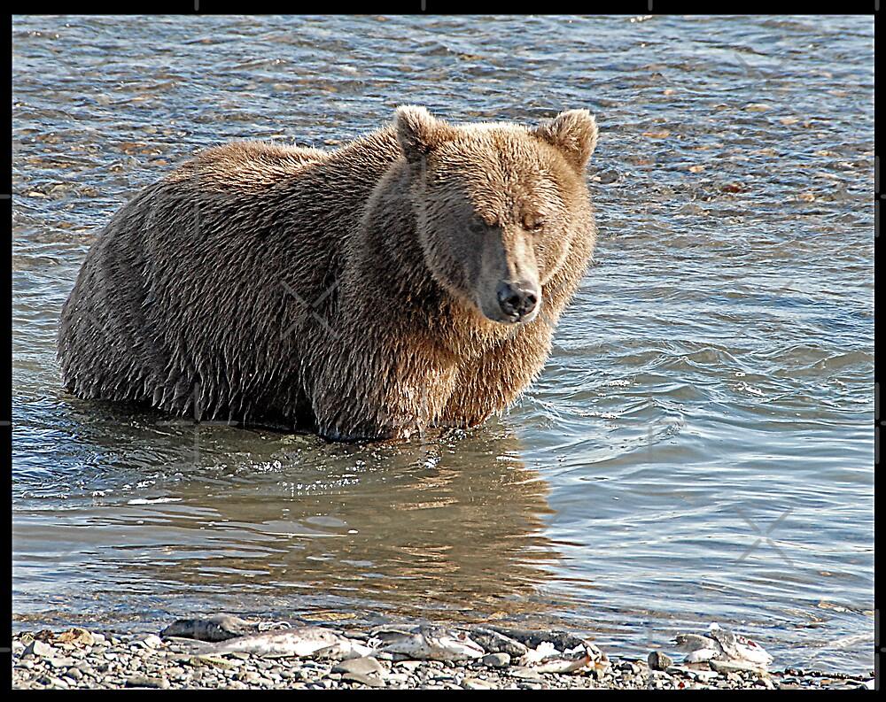 Bear Series # 1 by Dyle Warren