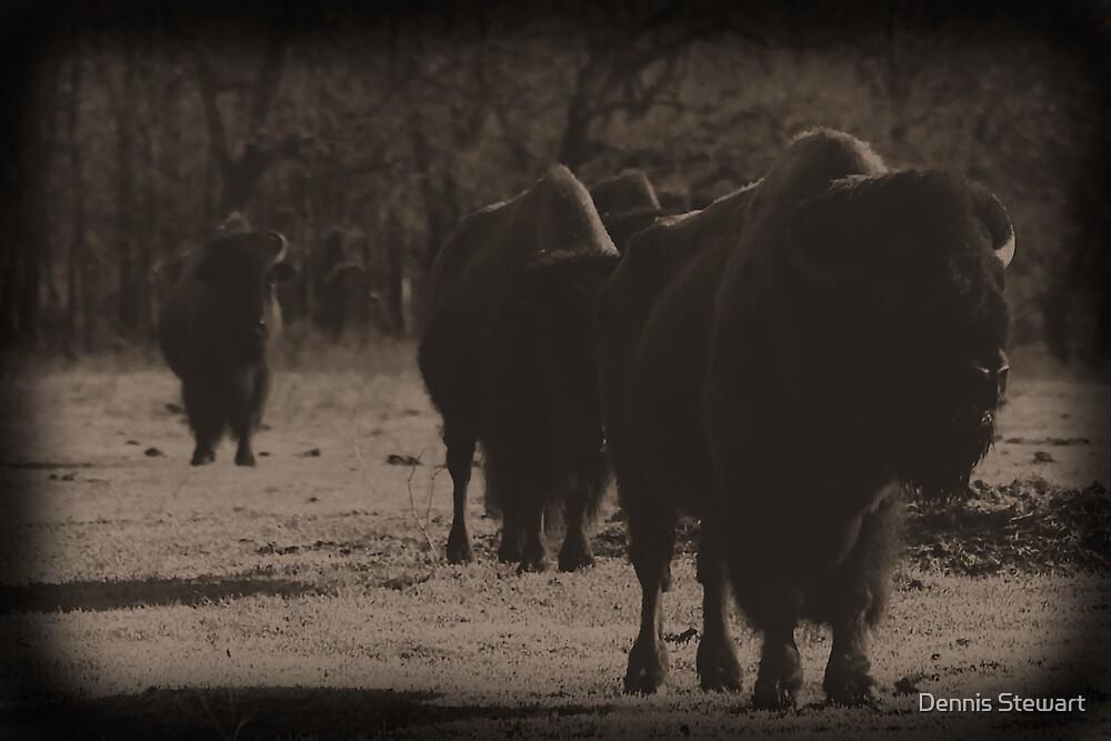 Buffalo Dust  by Dennis Stewart