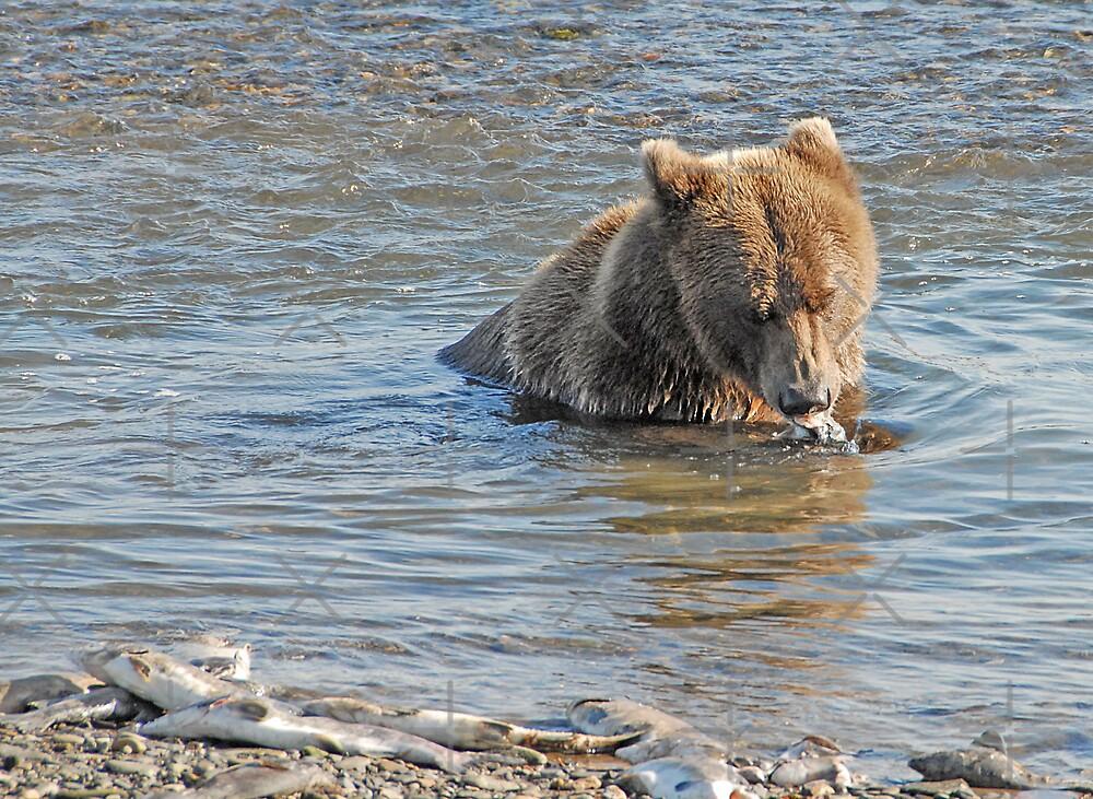 Bear Series # 13 by Dyle Warren