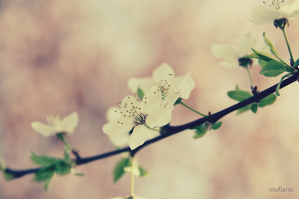 spring by muflena