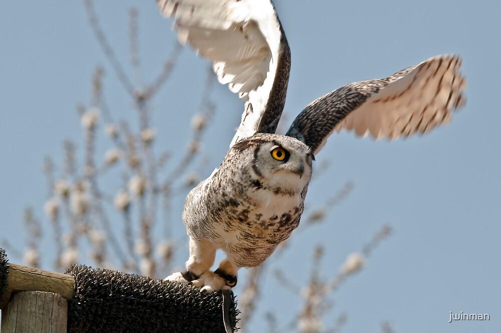 Takeoff! by jwinman