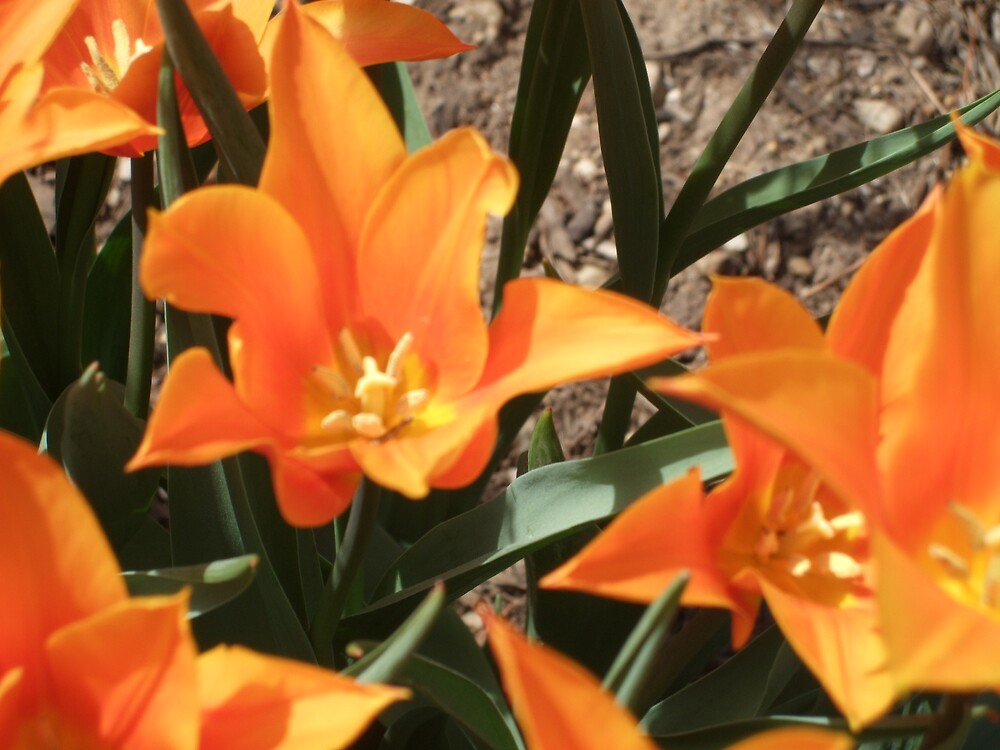 Spring is in the air- Orange by nutty11500